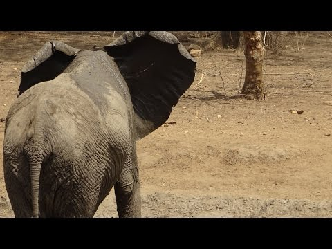 Trapped by elephants at the Nakamba Waterhole in Majete Game Reserve Malawi