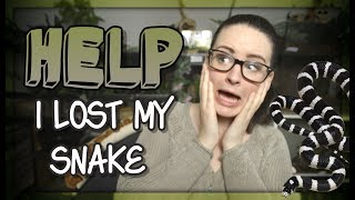 LOST MY SNAKE!?!! (What to do)
