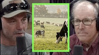 Can You Feed the Masses Without Factory Farming? w/Joel Salatin | Joe Rogan