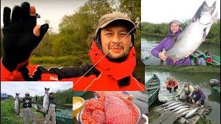 Чавыча. Лососи Камчатки. King salmon. Salmon of Kamchatka.