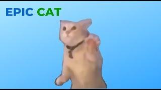 EPIC CAT MEME