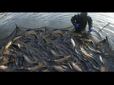 Cast Nets Fishing Big Catch Fish Fresh Water 2017  – Best Net Fishing Using Manual Tools