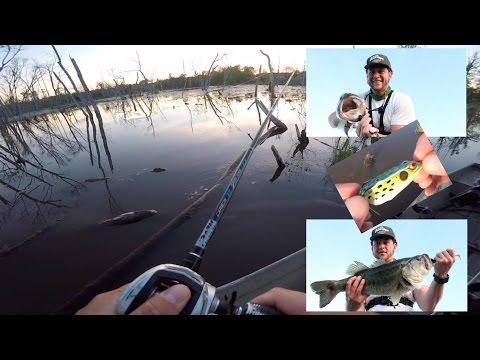top-water-frog-fishing-=-big-bass-freak-out!-&-beaver-kill?