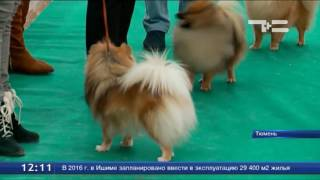 В Тюмени пройдет собачий конкурс красоты