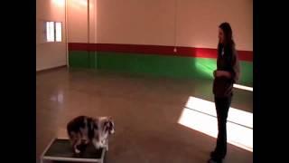 Dog Training In Minneapolis