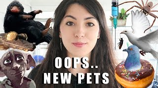 i got 6 new pets   meet my ferrets   my new pets   animal rescue