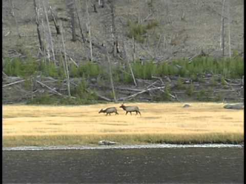 Yellowstone National Park VIP Adventure Travel Scott McKinley