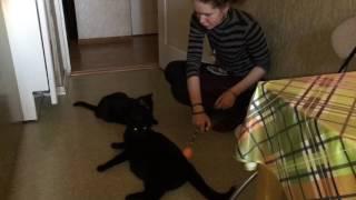 Тренинг кликером кошек Ады. Кликер-дрессировка
