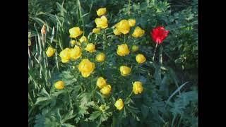 Дикорастущие растения в саду