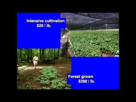 Ken Mudge, Forest Farming