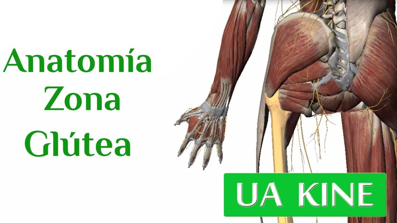 Anatomía Zona Glútea - YouTube