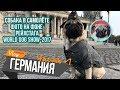 В Германию с собакой Обман при прокате авто World Dog Show Chubaka Vlog mp3