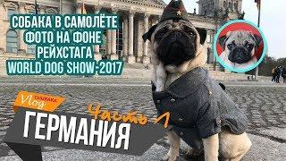 В Германию с собакой/Обман при прокате авто/World Dog Show/Chubaka Vlog!