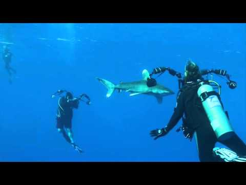 Red Sea Sharks 2015