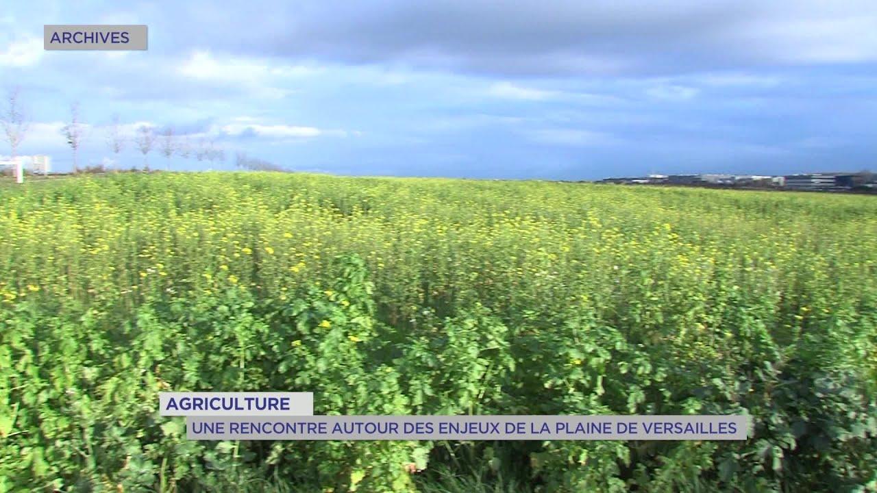 Yvelines | Agriculture : Une rencontre autour des enjeux de la Plaine de Versailles
