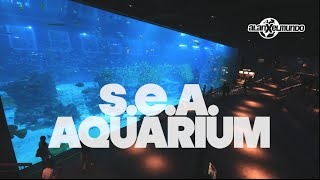 El segundo acuario más grande del mundo! Singapur #4