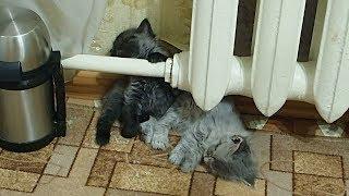 Котята засыпают у батареи.Просто прелесть