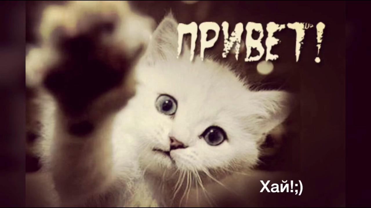 кошки картинки с надписью привет таиланде многих
