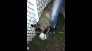 Dog try to get the ball