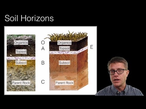 Soil and Soil Dynamics