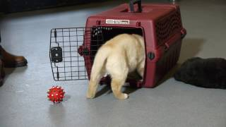 Tip Tuesday: Crate Training a Puppy