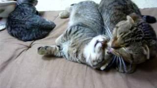 父と子猫がじゃれて お母さんは横で傍観、、