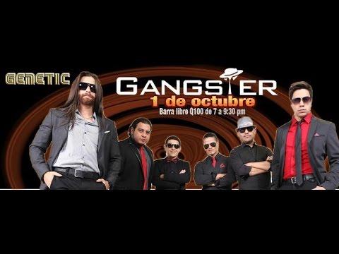 GANGSTER en Genetic Majestic Club de Guatemala