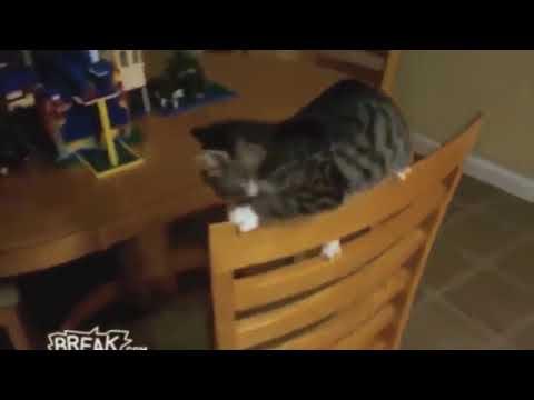 Коты приколисты -  шалости котиков/ Cats FUNNY -  pranks 2017