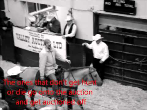 Their Our Friends- Horse Auctions/Slaughter