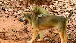 Funny Monkey bitten with Dog|How about the both?
