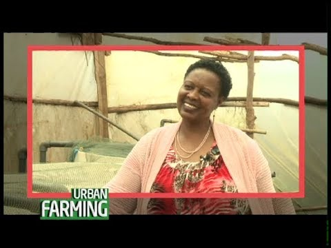 From Working In The US, Now A Thriving Fish Farmer In Thika - Part 1
