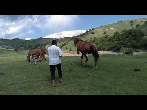Кыргызстан мустанг вездеход