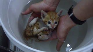 Блохастый котёнок
