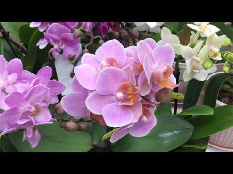 Обзор орхидей в Бауцентре 03 01 2020 г  Нереальное наслаждение от  разнообразия орхидей!!!!