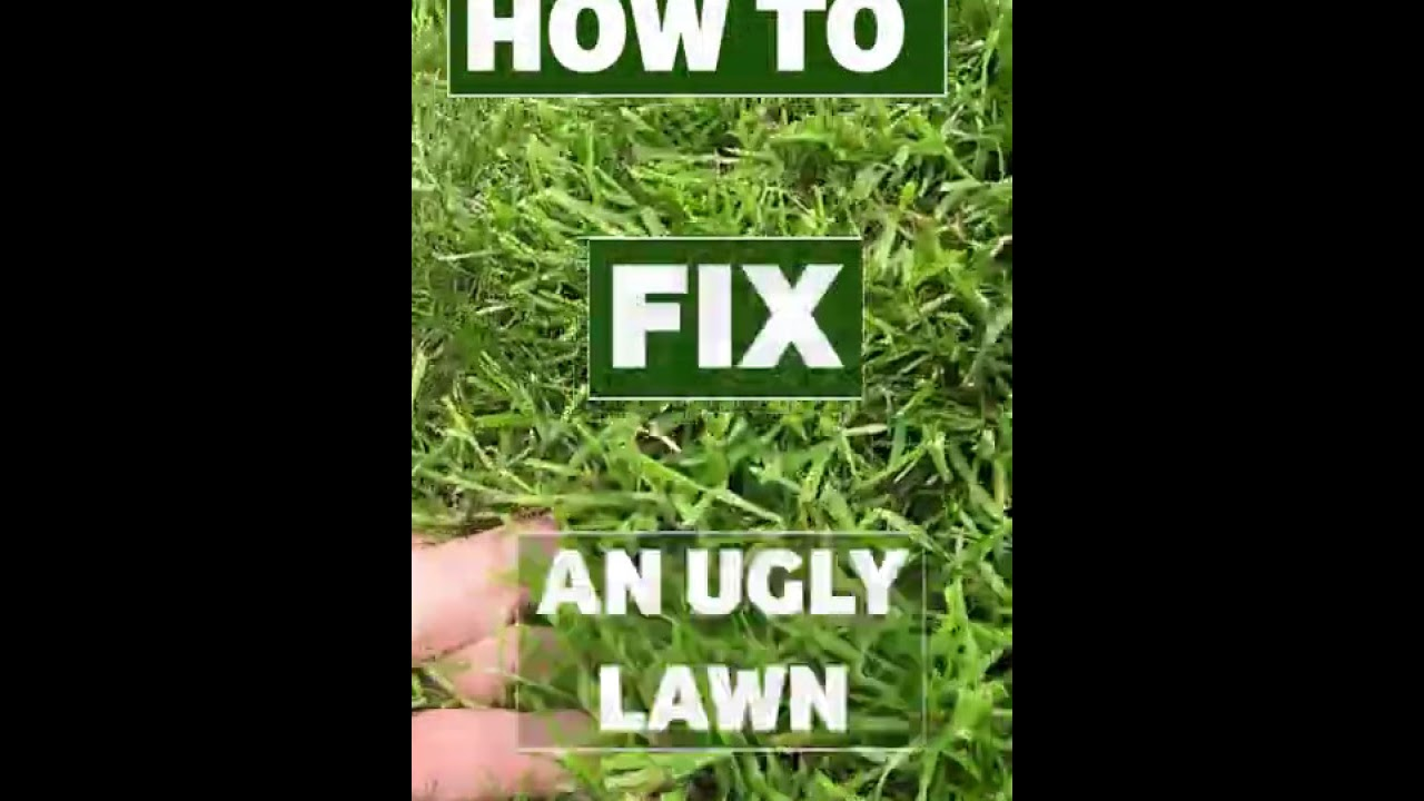FAST ugly lawn fix | Step by step to get the perfect lawn #shorts