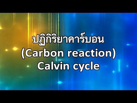ปฏิกิริยาคาร์บอน (Carbon reaction) – Calvin cycle วิทยาศาสตร์ ม.4-6 (ชีววิทยา)