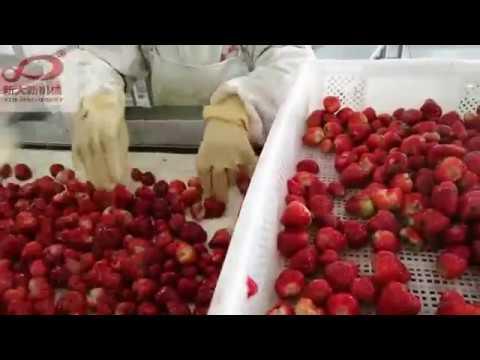 strawberry IQF fluidized tunnel freezer