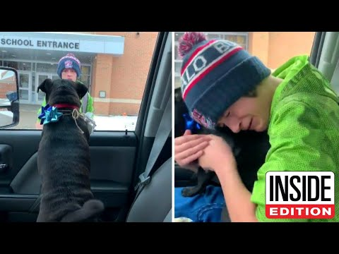 14-Year-Old Cries When Missing Dog Returns Home
