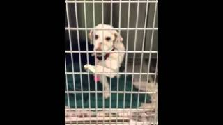 Baldwin Park Shelter (10 miles east of downtown Los Angeles) 626 43...