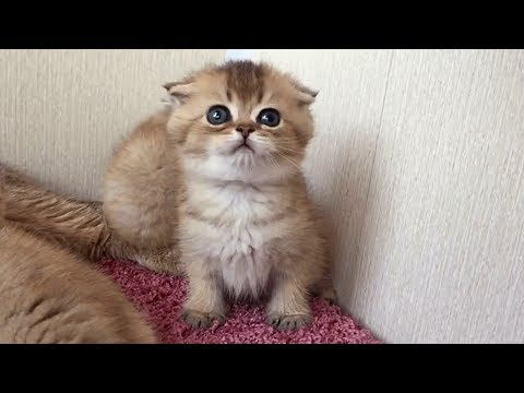 The Cute Little Kittens With Soft Meowing | Fun With Cat