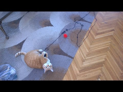 Cat playing with yarn ball