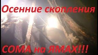 Речные Монстры Миграция СОМА Тысячи сомов на зимовальной яме