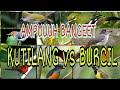 Suara Pikat Kutilang Ribut Vs Burcil  Sangaaaat Ampuuuh  Mp3 - Mp4 Download