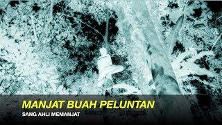 Gambar cover MANJAT PELUNTAN & GEGAR DAHAN DURIAN - ADEK BUJANG JAGO MANJAT