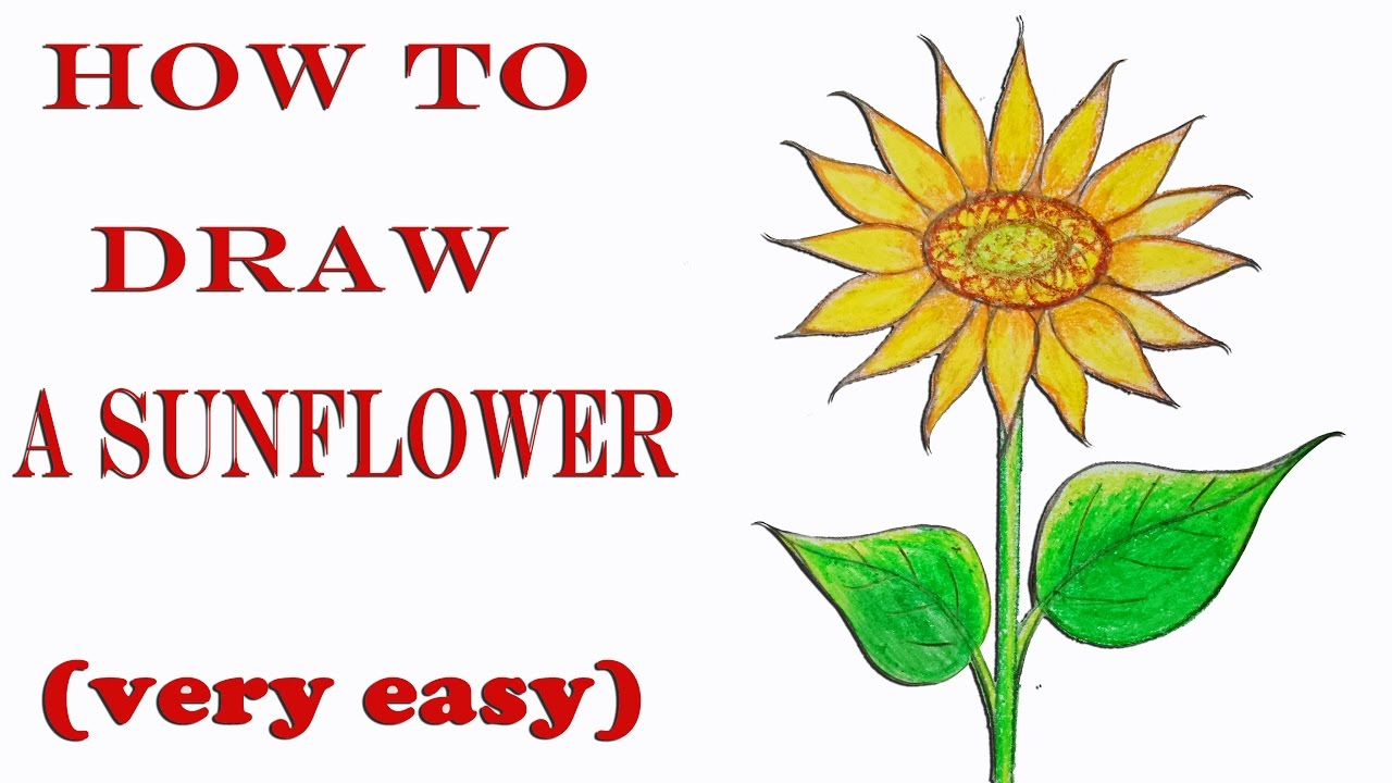 How To Draw A Sunflower Step By Step Very Easy