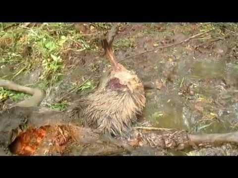 Петсон и Финдус: Охота на лося (1999)