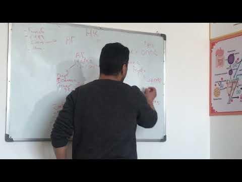 Патфизиология - Артериальные Гипертензии и Гипотензии. Лектор: Эльхенди Тауфик Набильевич