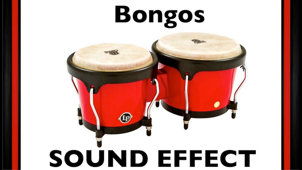 Bongos Sample   Sound Effect   Loops   HD
