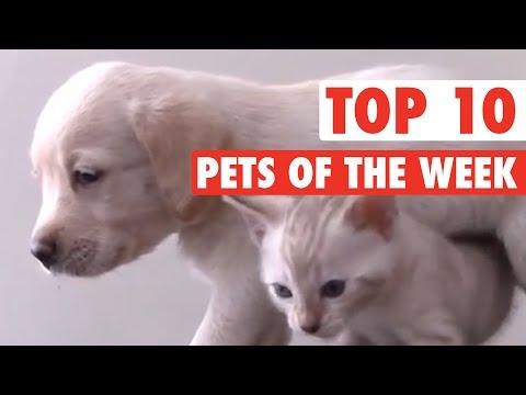 Best Pets of the Week || Dec 4, 2015