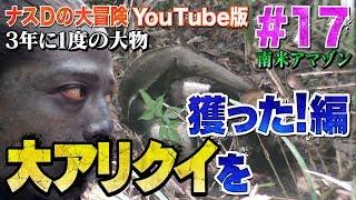 【#17】ナスDの大冒険YouTube版!南米アマゾン3年に1度の大物 大アリクイを獲った!編/Crazy Director 's Great ant Harvested ナスd 検索動画 11